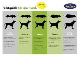 träna ryggmuskler på hund